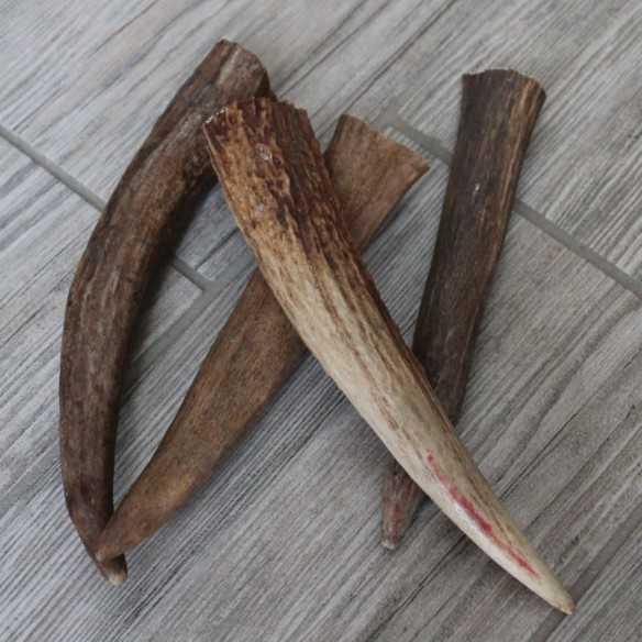 Corno di Alce + 15 cm